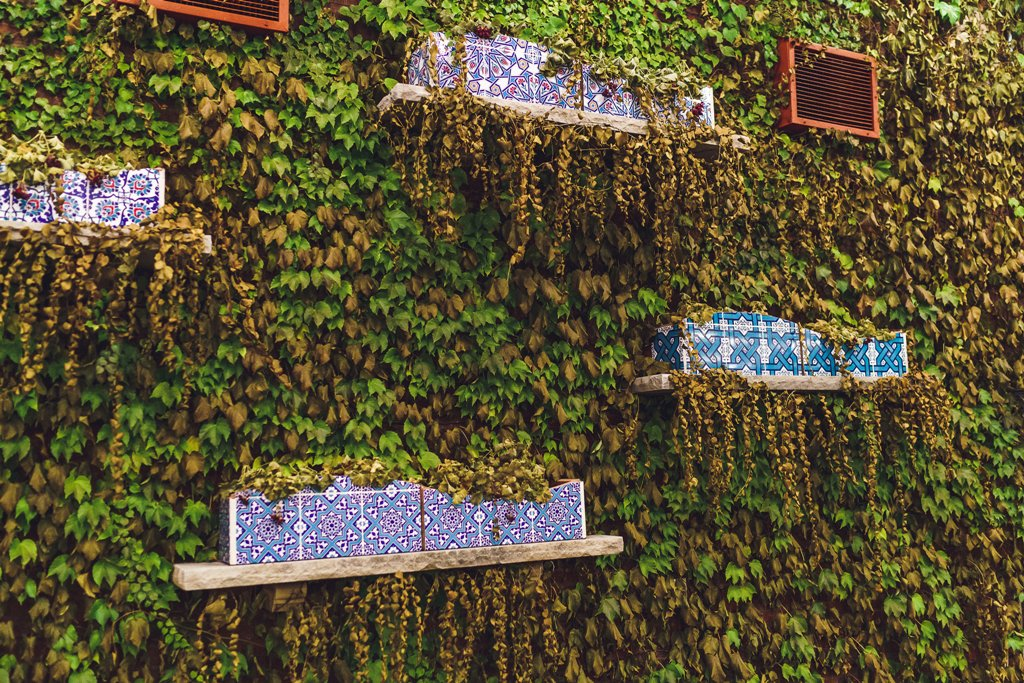 Wall of Ivy at Galleria Marchetti